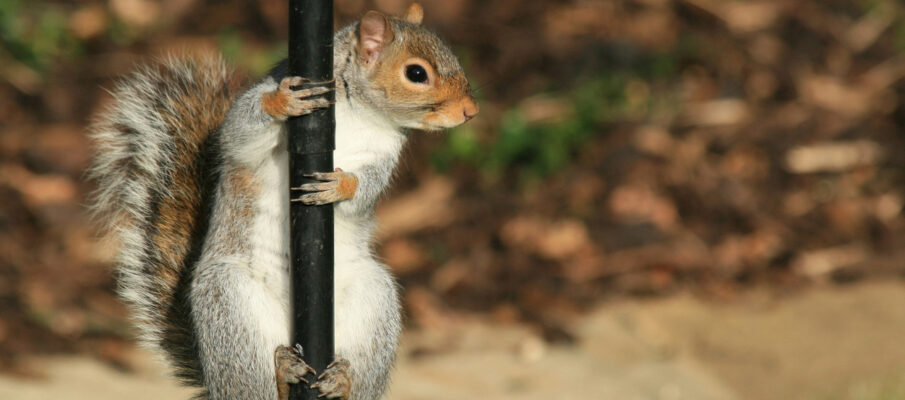 squirrel-1349838-1278×861